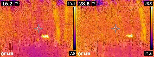 FLIR E6 vs. E8 Deer in the woods