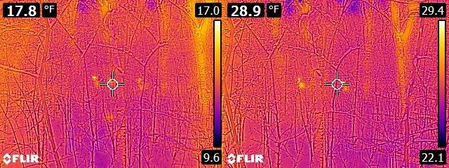 FLIR E6 vs. E8 Deer in woods - two of them