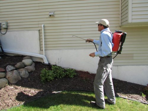 Controlling boxelder bugs: a discussion with BOGO Pest Control