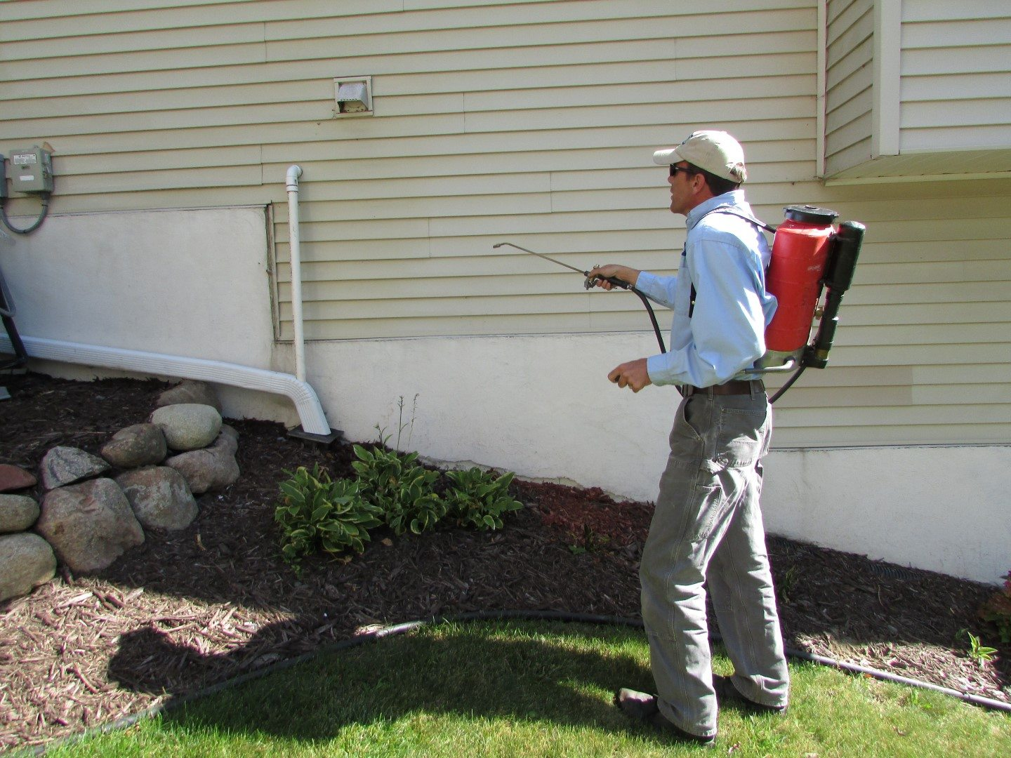 Controlling Boxelder Bugs A Discussion With Bogo Pest Control