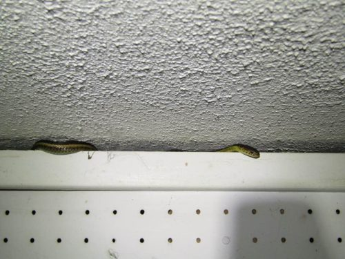 Snake in basement