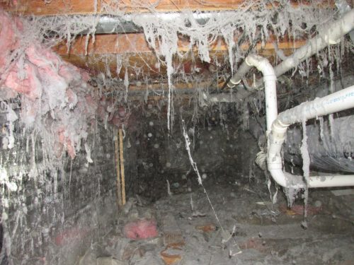 Creepy crawlspace