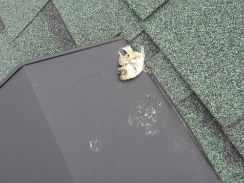 Dead fish on a roof