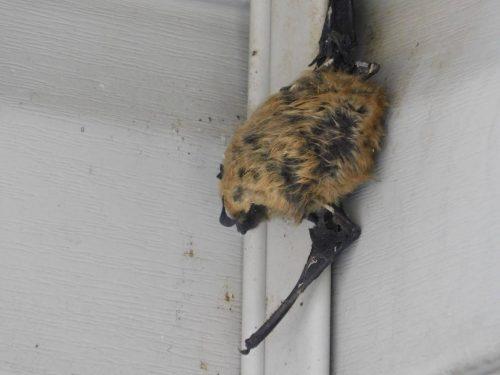 Frozen bat close-up