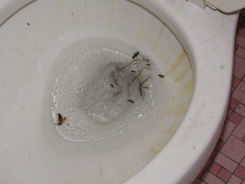 Roaches on ice