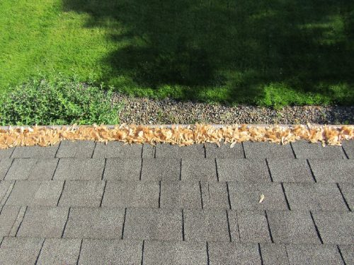 Seeds in gutter cover