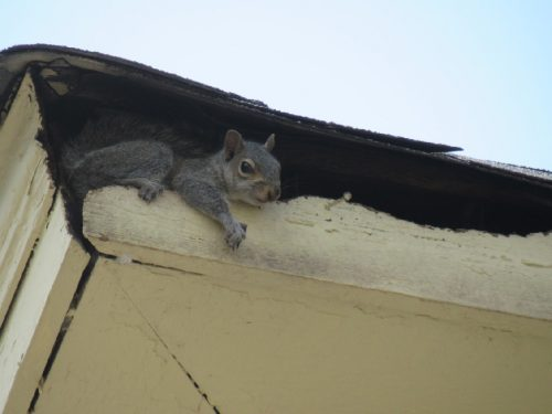 squirrel hanging out